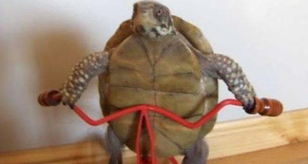 Turtle Bike