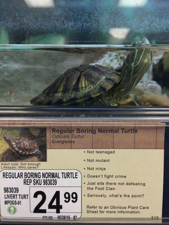 Boring Turtle