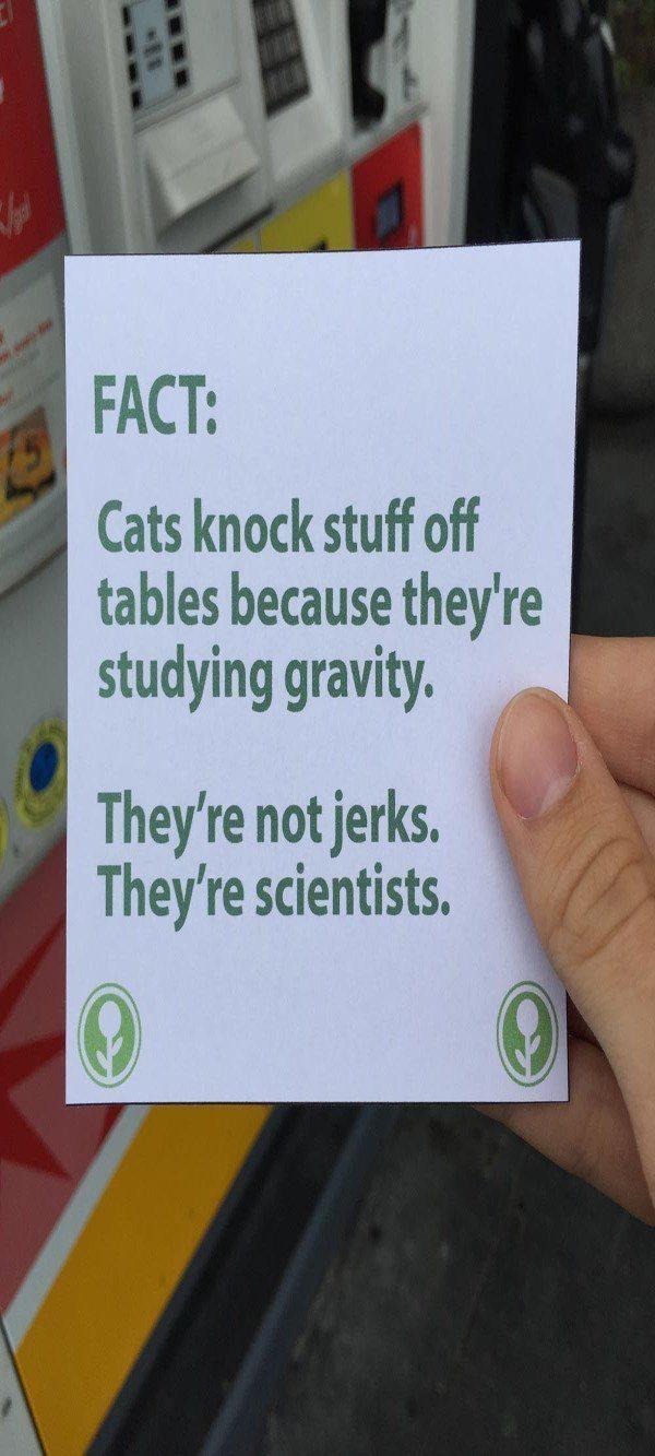 Cats Knock Stuff Off