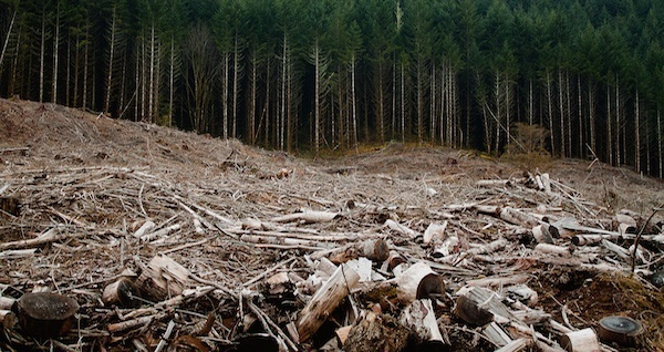 Clearcutting Earth Day
