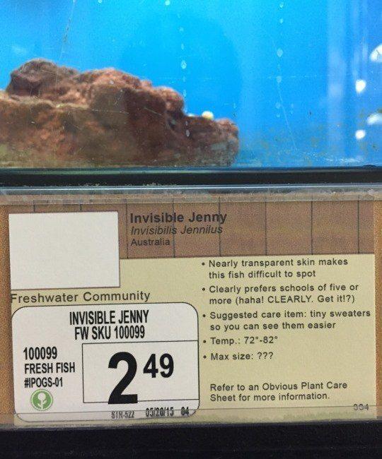 Invisible Jenny