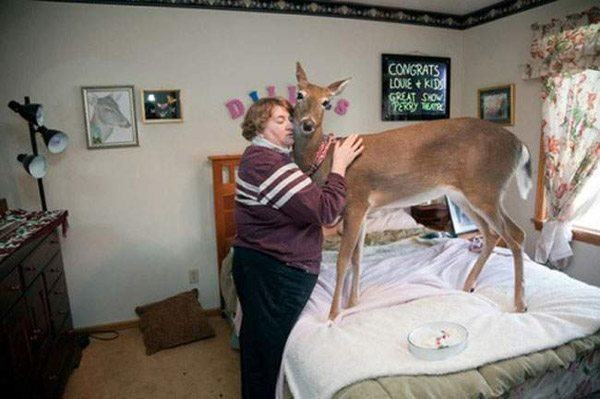 Lady With Her Deer