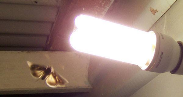 Moth Light Bulb