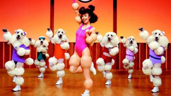 Poodle Aerobics