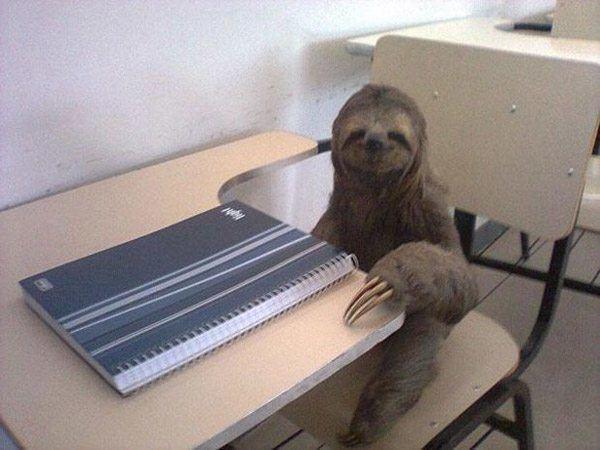 Sloth Student