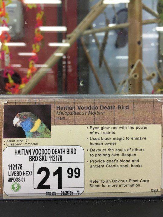 Voodoo Death Bird