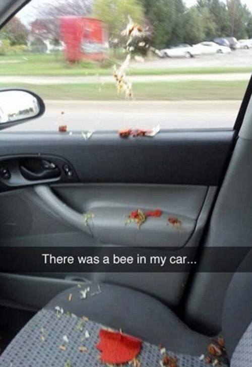 Image of: Dog Hogwarts Degree Funny Snapchats Bob Ross Bee In The Car Runt Of The Web 37 Funny Snapchats That Are Work Of Pure Comedy Gold