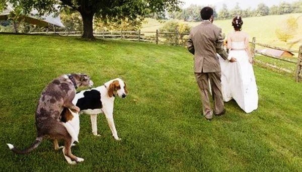 Dog At The Wedding