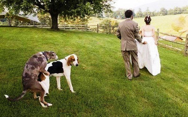 Dog In The Wedding