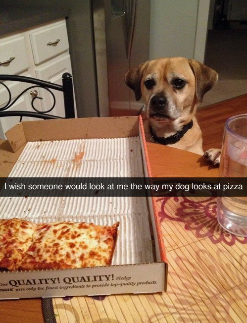 Dog Looking At Pizza