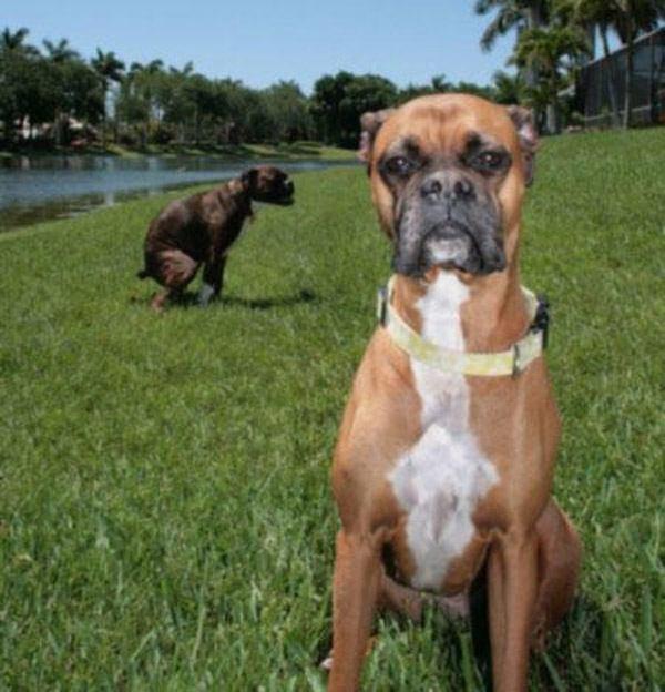 Dog On Dog Photobomb