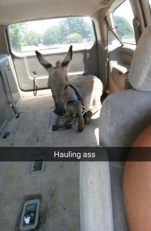 Hauling Ass Funny Snapchats