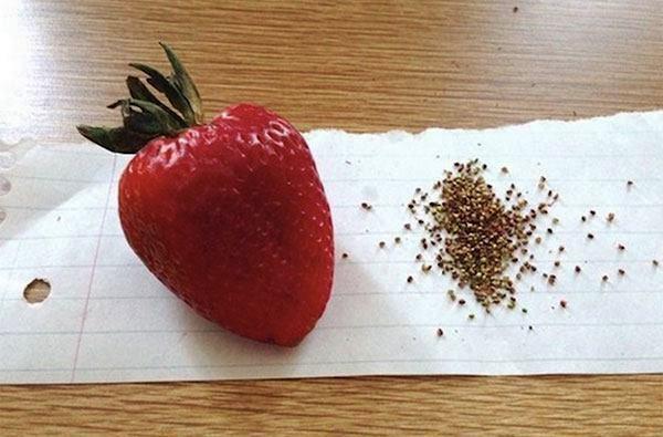 Seedless Strawberry