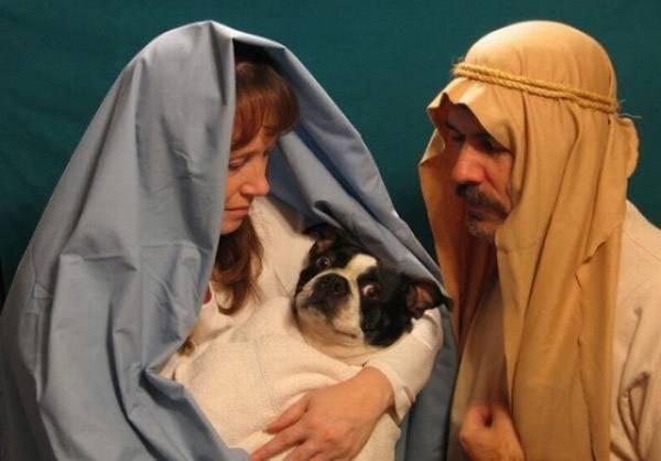 Dog Jesus
