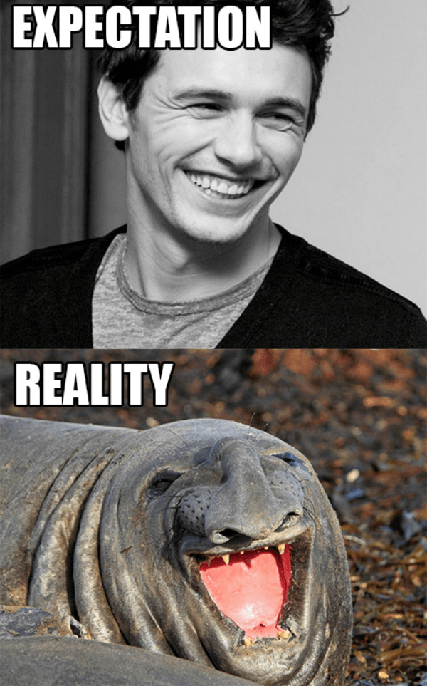 Elephant Seal Smile