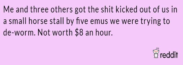 Fighting Emus