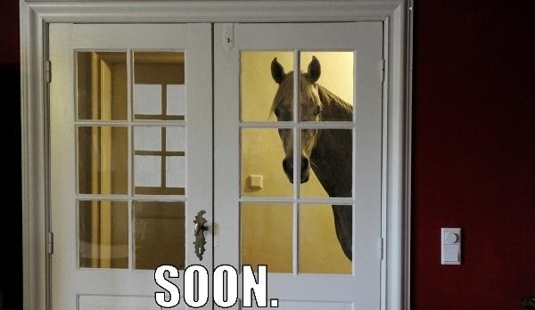Indoor Horse