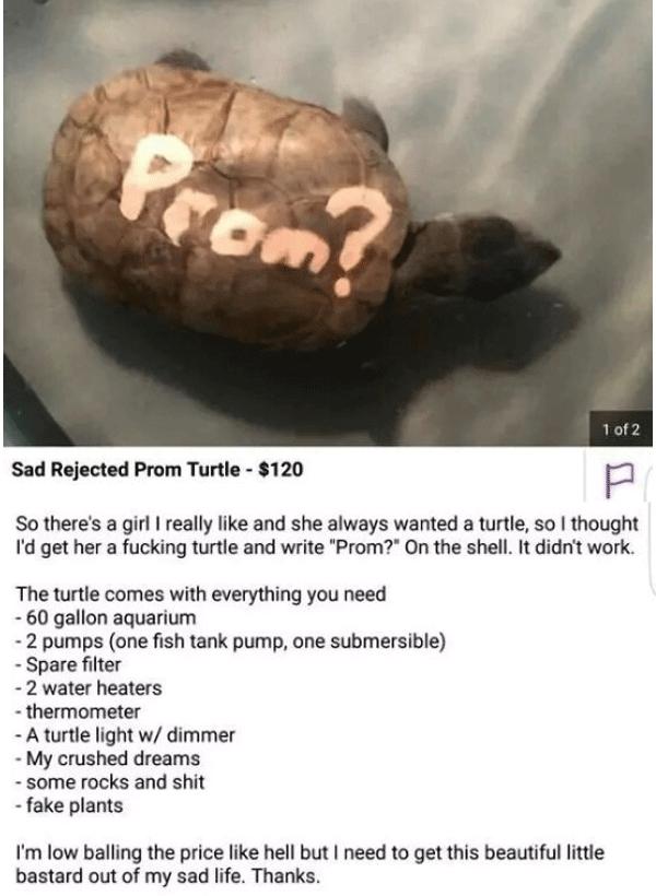 Prom Turtle