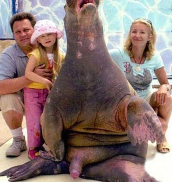 Walrus Dick