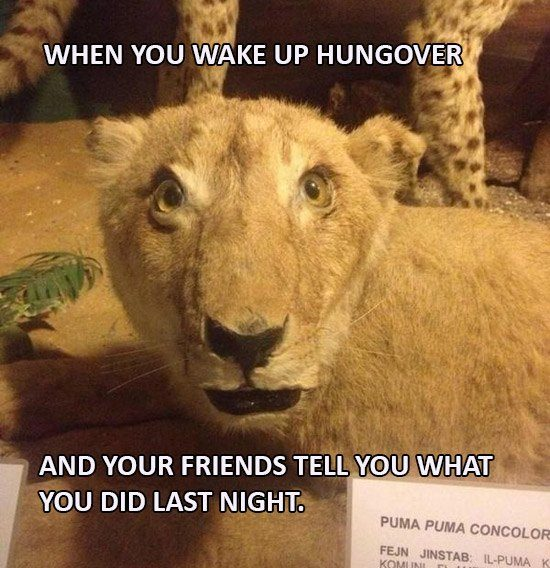 LION Hungover