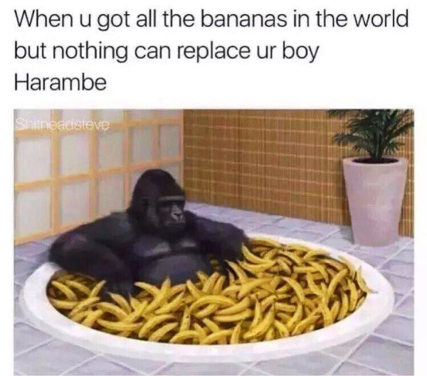 All The Bananas