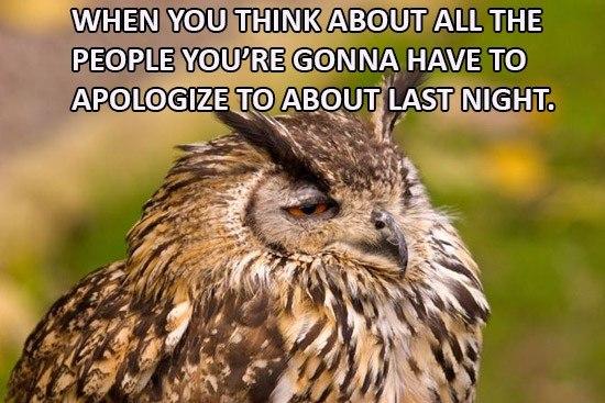 Apologize Drunk Owl