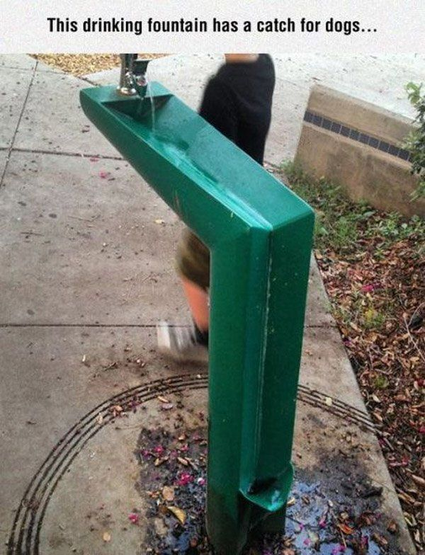 Dog Drinking Fountain