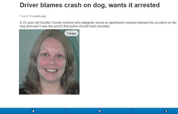 Dog Driver Arrest