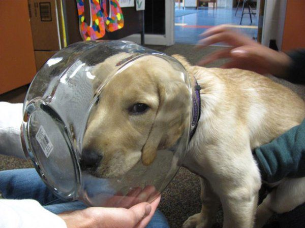 Dog Stuck In Fish Bowl