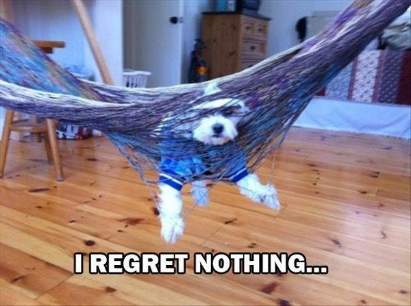 Dog Who Regrets Nothing
