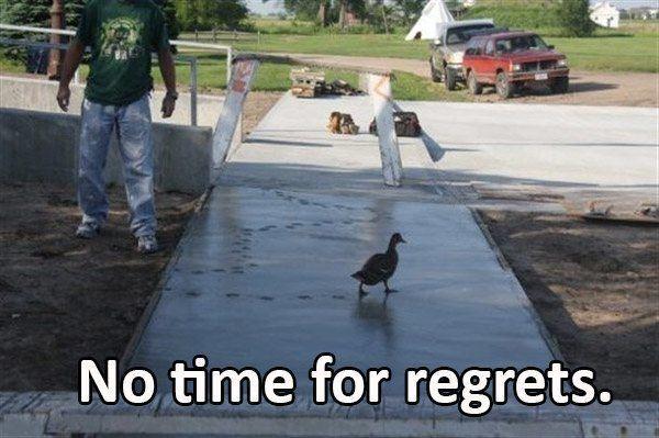 Duck Regret