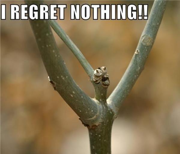 Funny Regret Nothing Memes