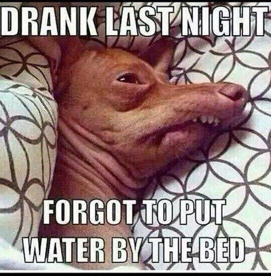 No Water Dog