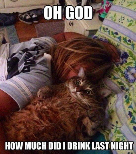 Oh God Cat