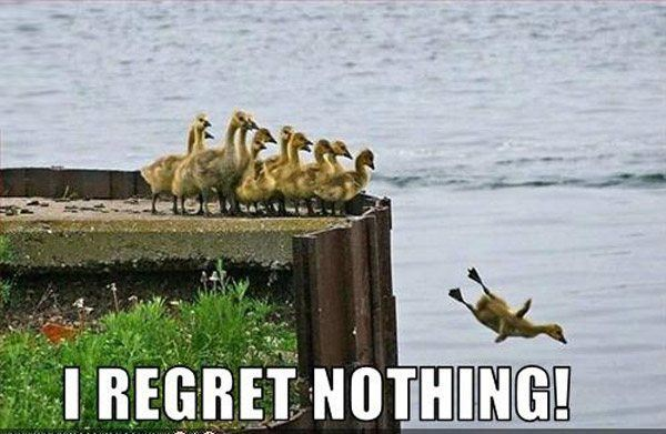 Regret Nothing Duckling