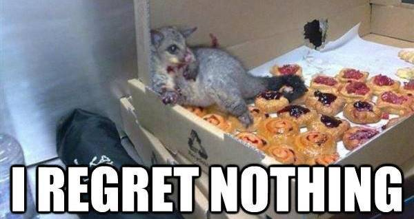 Regret Nothing Possum