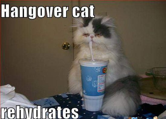 Reyhydrate Cat