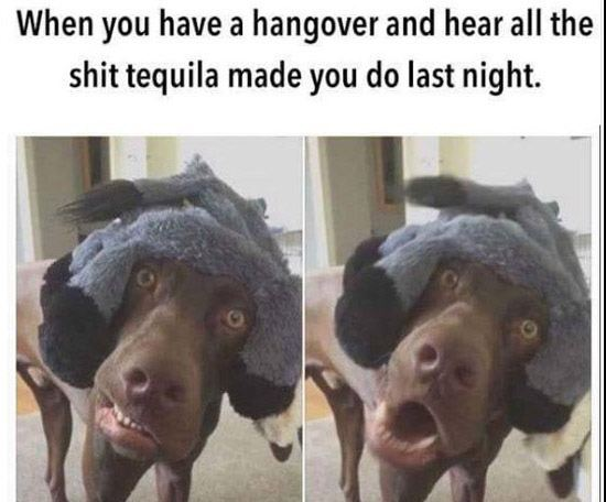 Tequila Dog
