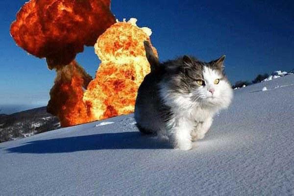 Action Hero Cat Funny Photoshops