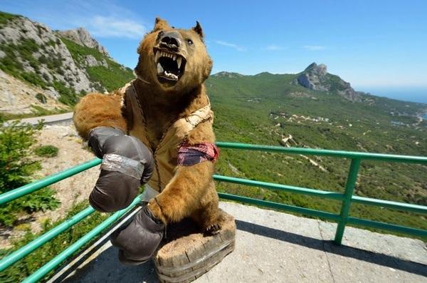 Boxer Bear