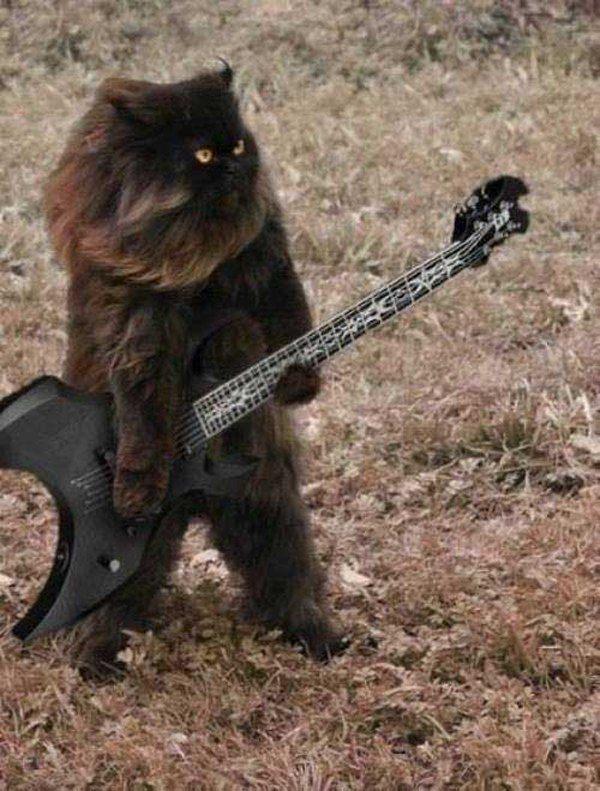 Death Metal Cat