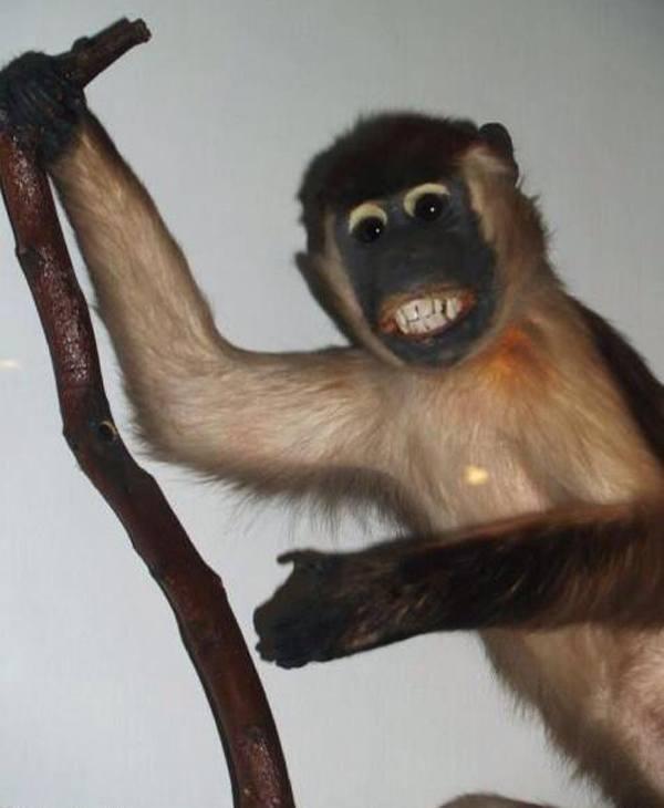 Deranged Monkey