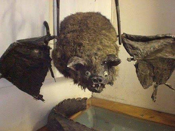 Derp Bat Funny Taxidermy