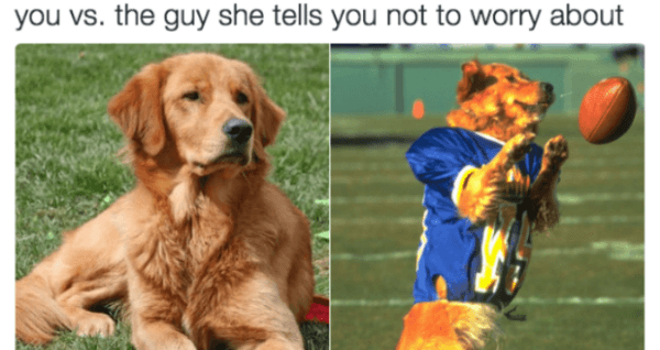 Dogs The Guy She Tells You Not To Worry About