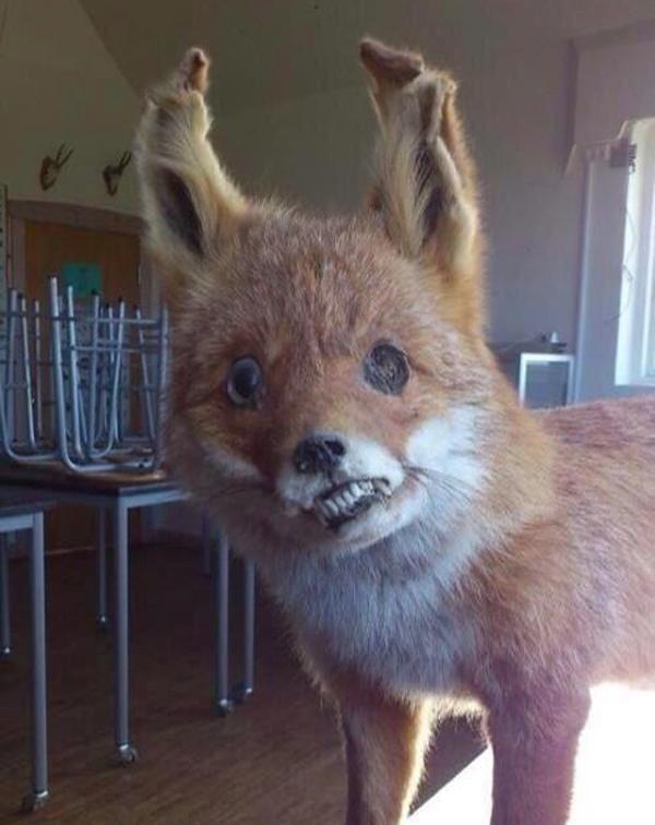 Drunk Fox