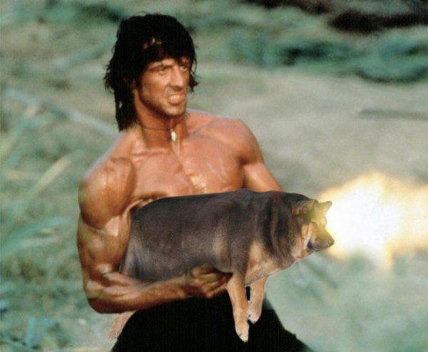 Fat Dog Rambo