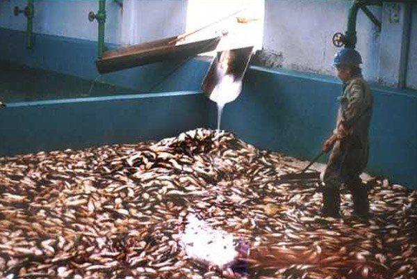 Fish Worker