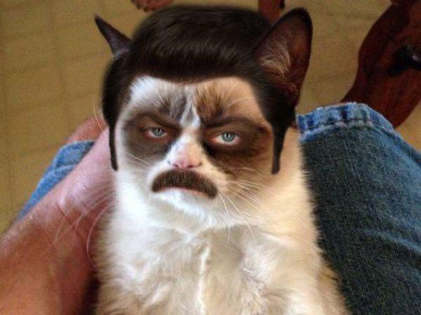 Grumpy Swanson Cat