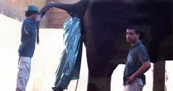Guy In Elephant As