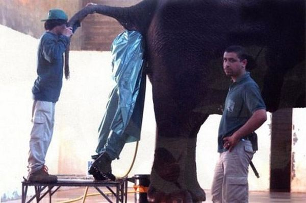 Guy In Elephant Worst Jobs